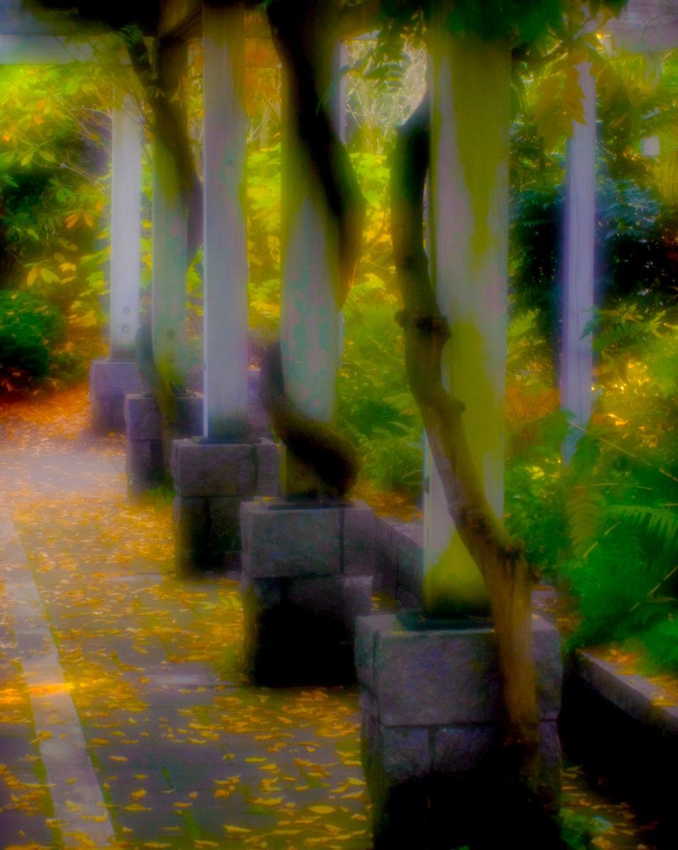 Arboretum-01.jpg