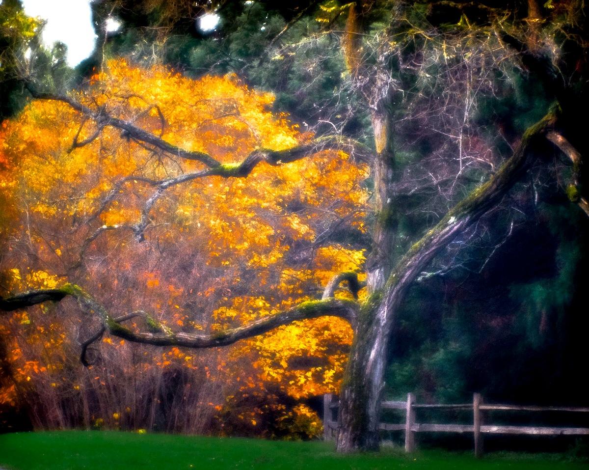 Arboretum-08.jpg