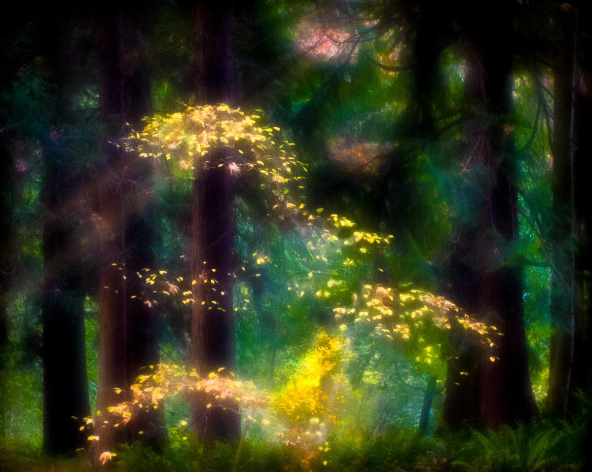 Arboretum-09.jpg