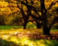 Pictorialist Arboretum