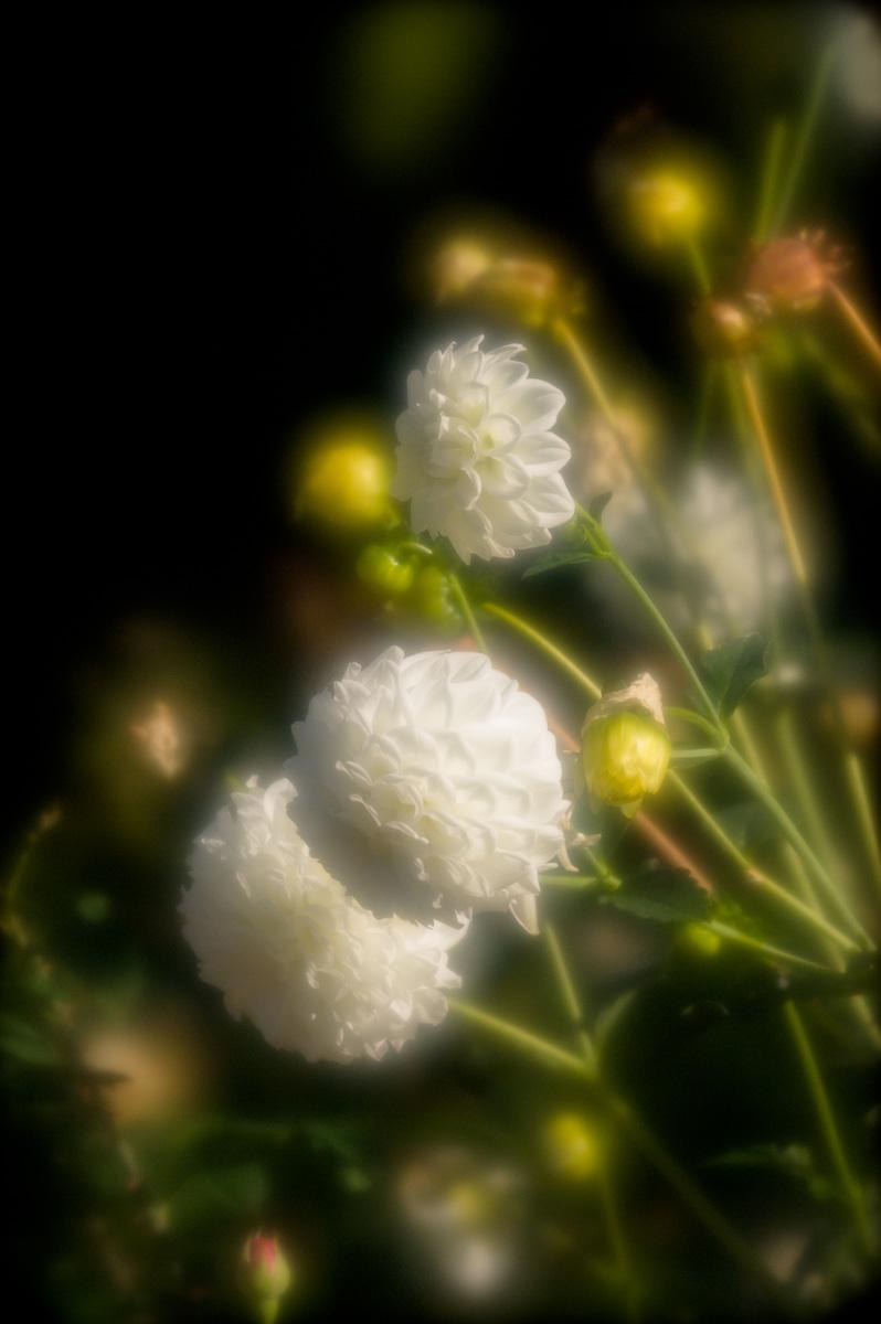 20110923-_BRH1863.jpg