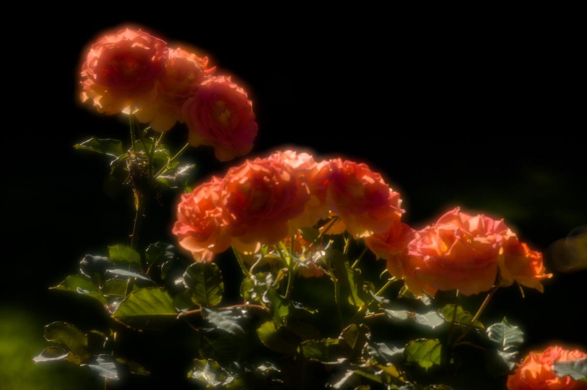 20110923-_BRH1877.jpg