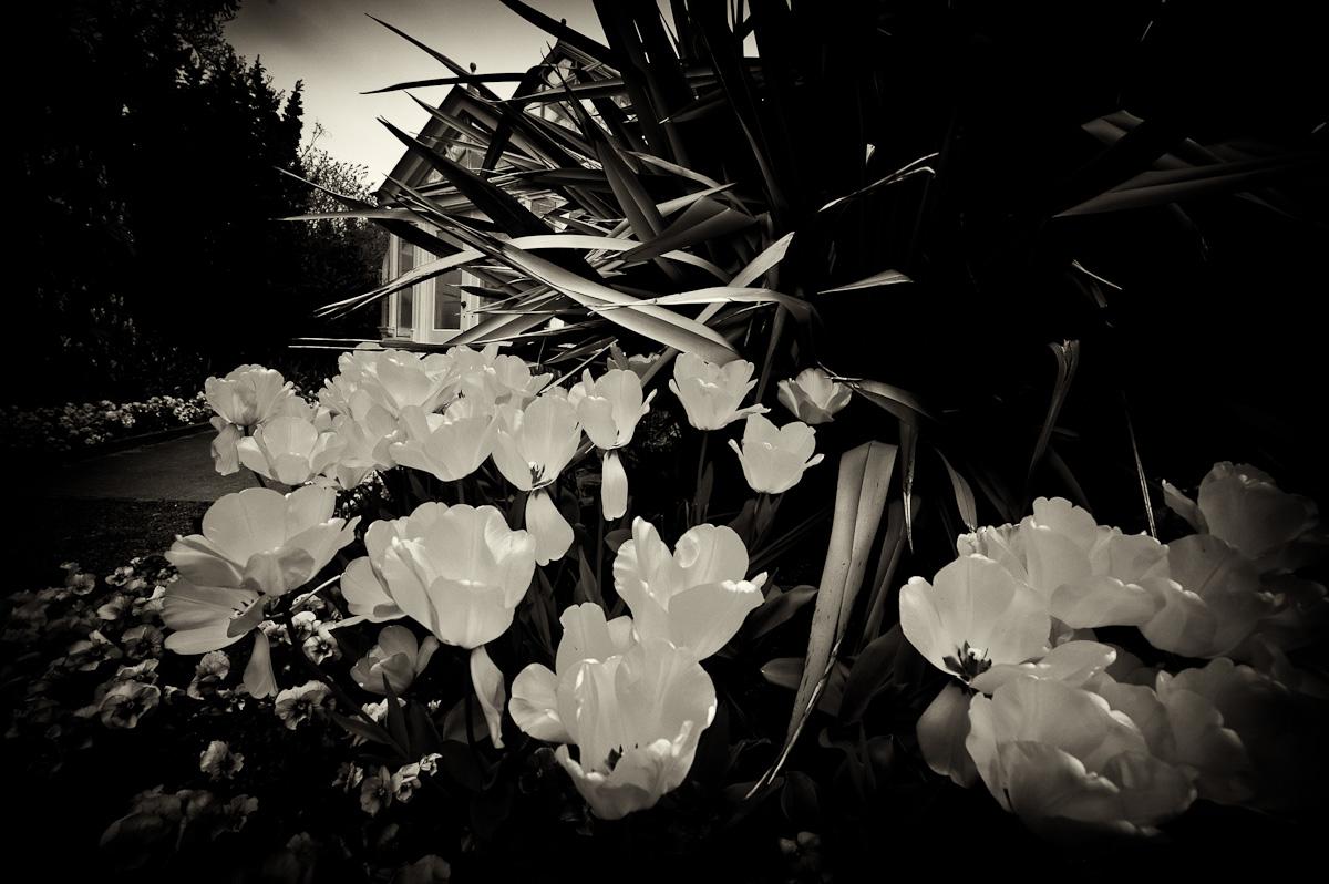 Conservatory-03.jpg