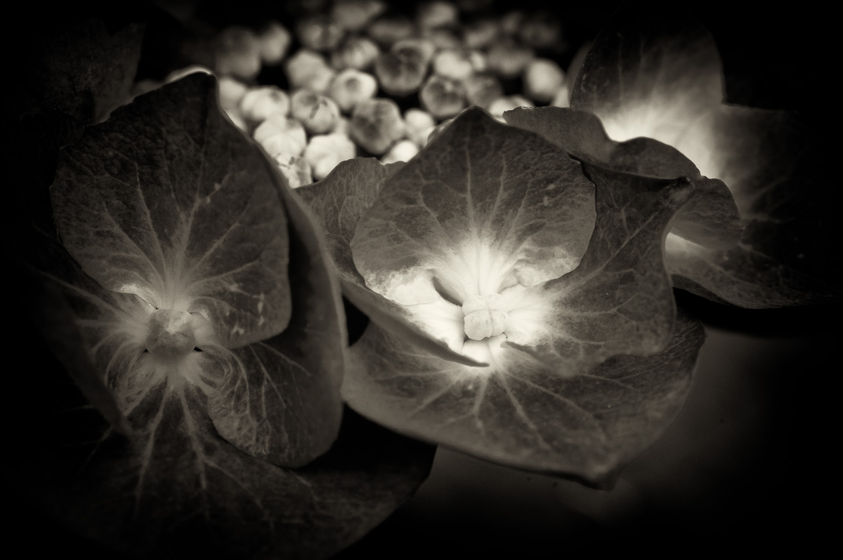 Conservatory-06.jpg