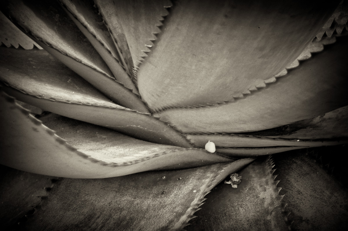 Conservatory-08.jpg